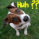 dog-confused-huh-150x150